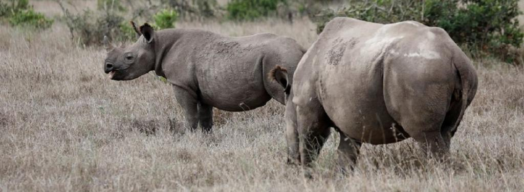 The Chinese government has recommended a traditional Chinese medicine called 'Angong Niuhuang Wan', which contains rhino horn, in contradiction of its ban on wildlife trade. Photo: @ChinaDaily / Twitter