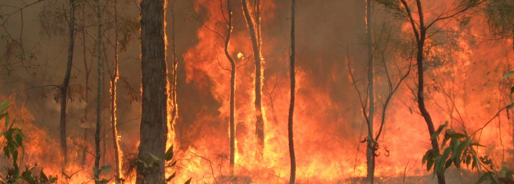 Australia roared into 2020 as a land on fire. The loss of life and property was devastating and so too was the damage to nature. Photo: Wikimedia Commons