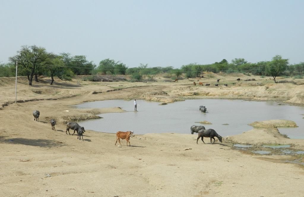 राजस्थान के अजमेर जिले का खेड़ा गांव में ग्रामीणों द्वारा बनाया गया तालाब। फोटो: अनिल अश्विनी शर्मा