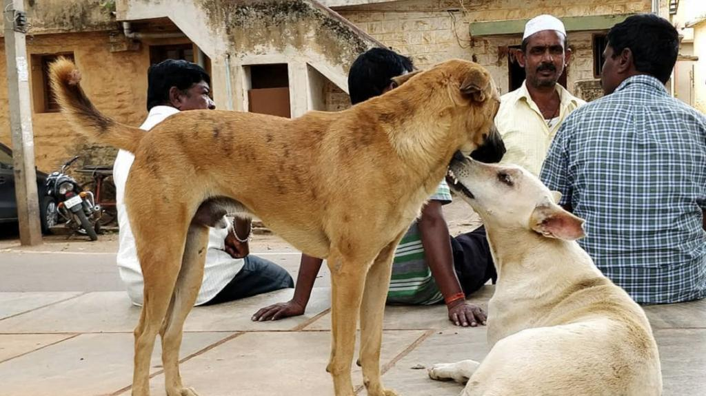 Free-ranging dogs reciprocate human behaviour towards themselves in kind, an IISER study has said. Photo: Debottam Bhattacharjee, IISER