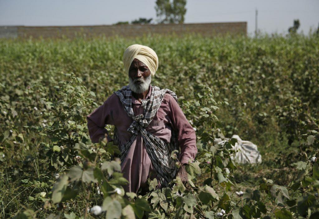 There is a significant effect of using pesticides on people's health. Photo: Vikas Choudhary
