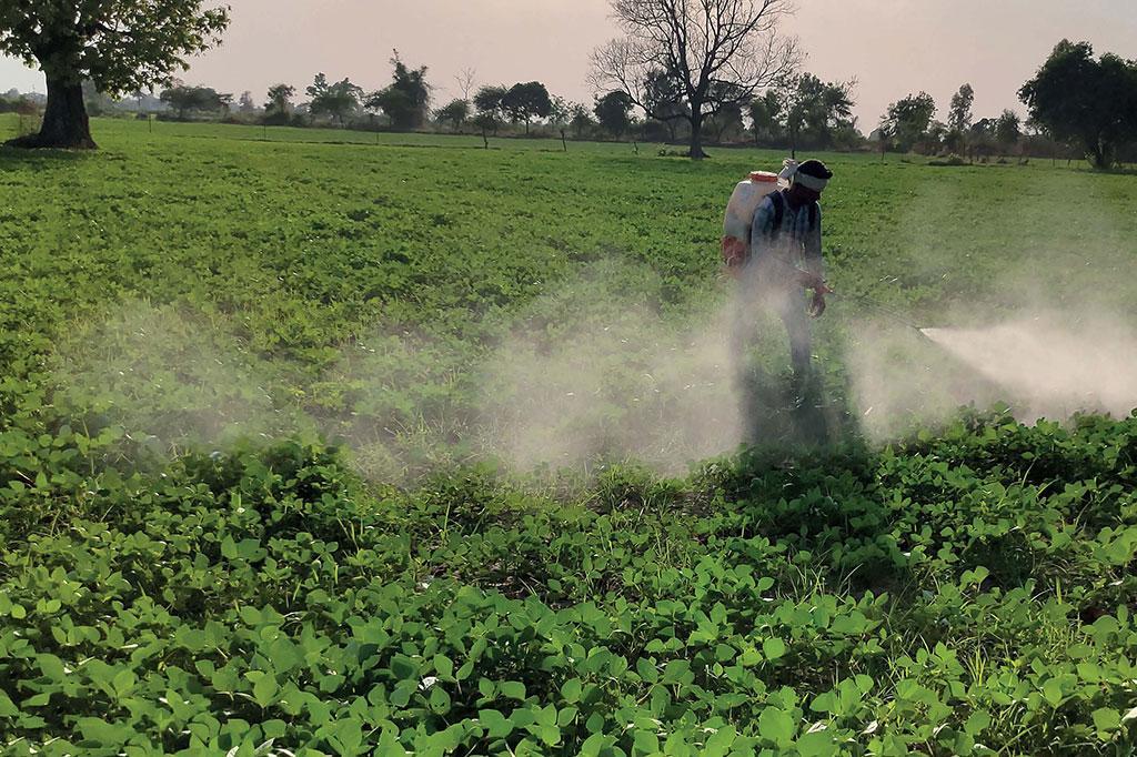मध्य प्रदेश के होशंगाबाद जिले के हिरन खेड़ा गांव में मूंग की फसल पर कीटनाशक का छिड़काव करते हुआ एक किसान। मूंग की फसल में तकरीबन तीन से चार बार स्प्रे कीटनाशक के किए जाते हैं (फोटो : राकेश कुमार मालवीय)