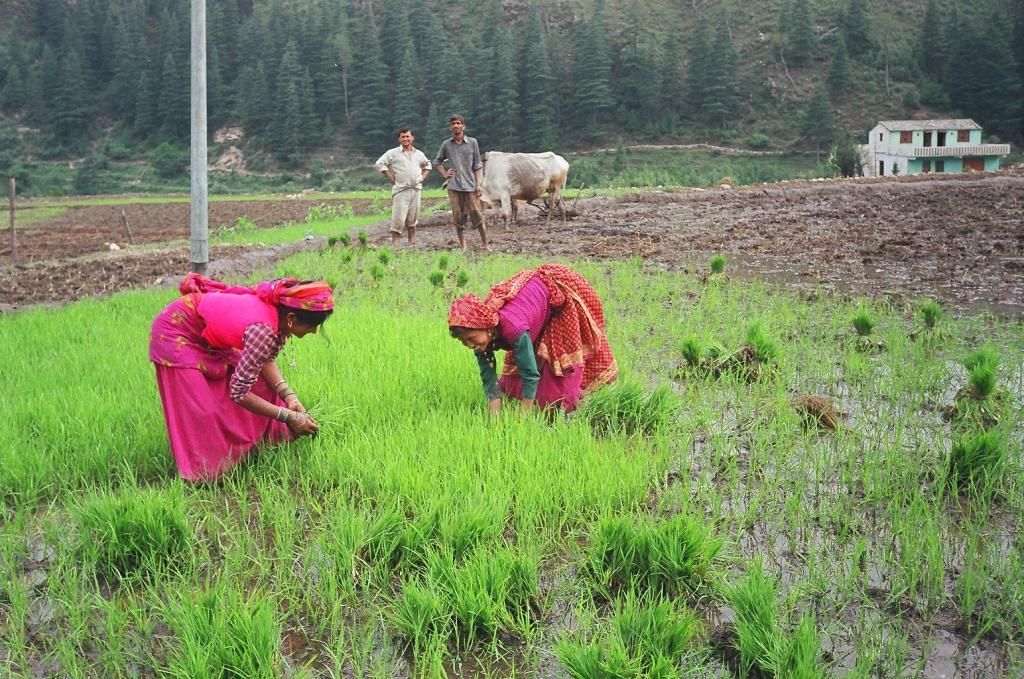 Women are gradually influencing decision-making in wheat-based systems.