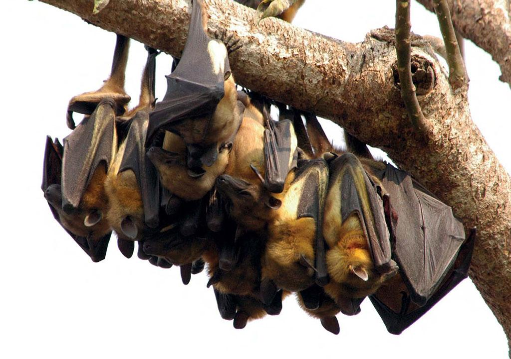 The behaviour of