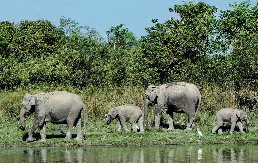 In April 2020, the National Board of Wild Life allowed Coal India Limited (CIL) to conduct open-cast mining in the Dehing Patkai Elephant Reserve in Assam. According to media reports, CIL was carrying out mining in 57 ha of the 98 ha reserve forest. The fresh recommendation extends the area by another 41 ha