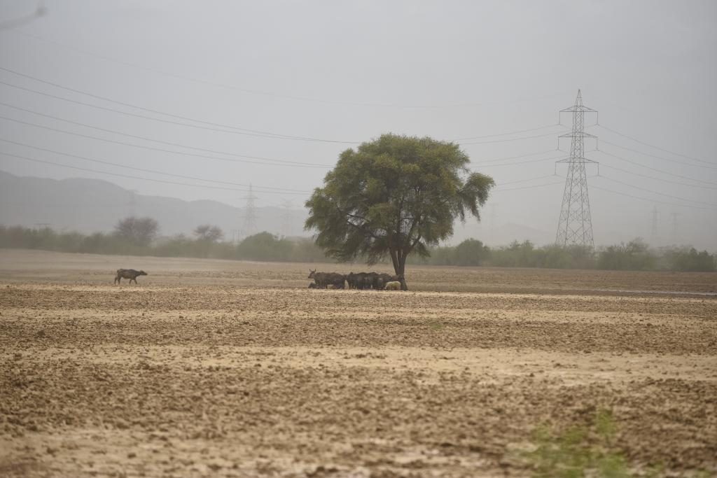 Land restoration target revised to 26 mln ha: Experts call for strategy overhaul.