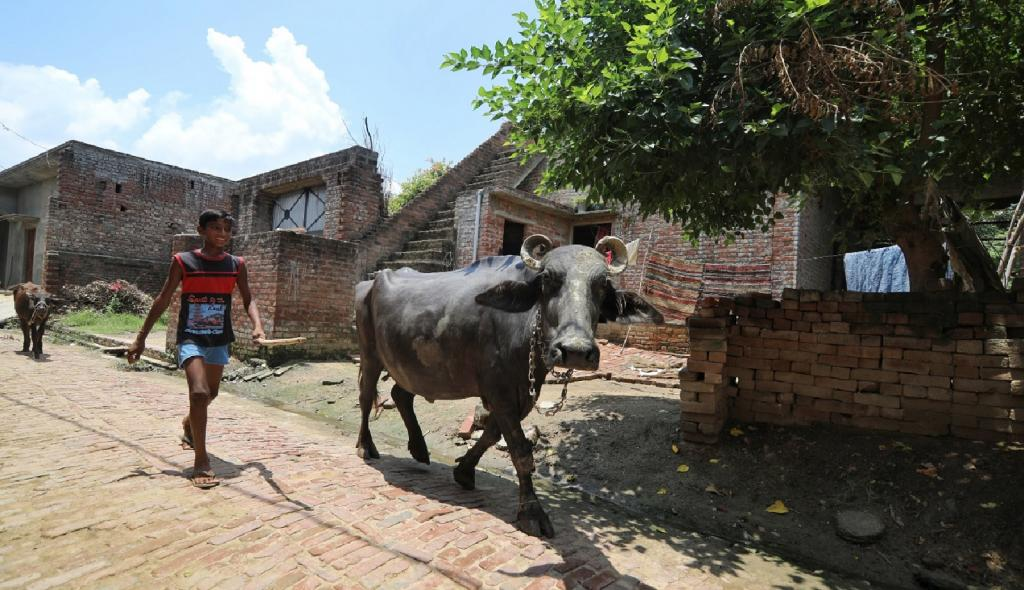 Will COVID-19 reverse migrants pick up the plough again? Palanpur throws up a question. Photo: Vikas Choudhary