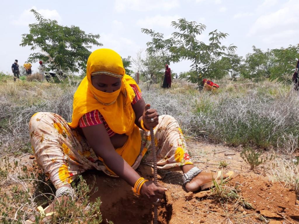 मारवों का खेड़ा गांव में 40 महिलाएं बदल रही हैं बंजर जमीन की दशा। फोटो: अनिल अश्वनी शर्मा