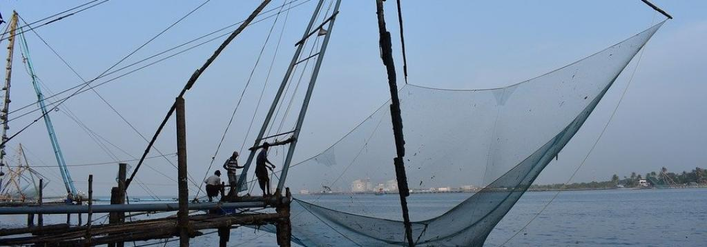Towards sustainable marine fisheries value chain: Reflections amid COVID-19 crisis