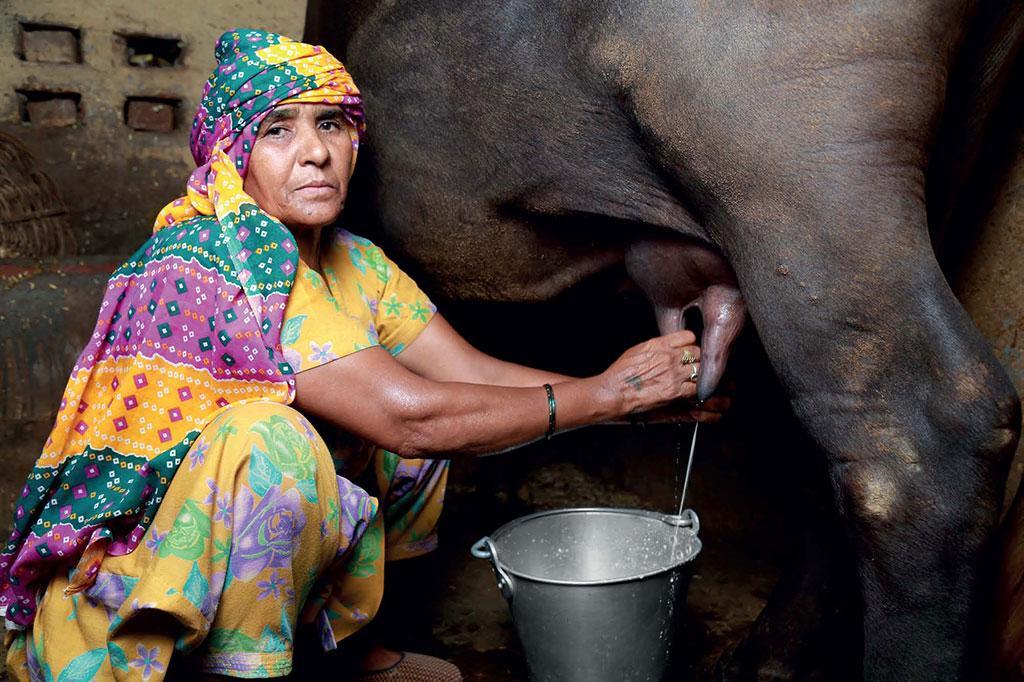 सीएसई ने जिन किसानों से बात की उनमें से अधिकांश को विदड्रोल पीरियड की जानकारी नहीं थी। यह एंटीबायोटिक के अंतिम इस्तेमाल और दूध बेचने से पहले की अवधि होती है