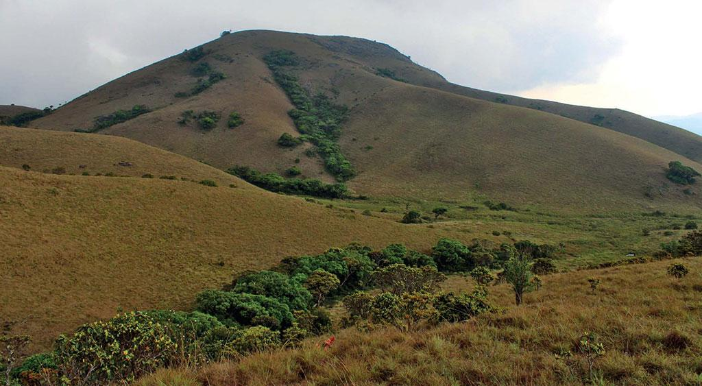 An example of intact shola-grassland mosaic in the hills of the Nilgiri plateau, with the sholas growing in valleys and grasslands covering the slopes.Photo: Godwin Vasanth Bosco