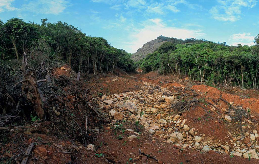 A massive landslide in one of the largest sholas in the Avalanche region, with hundreds of native trees and the stream ecology washed away. Photo: Godwin Vasanth Bosco