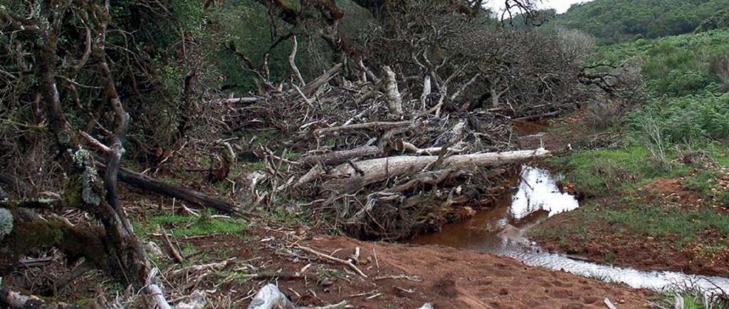Hundreds of native trees get uprooted and washed away in landslides in the Avalanche valley region  in the Nilgiri Hills. Photo: Godwin Vasanth Bosco
