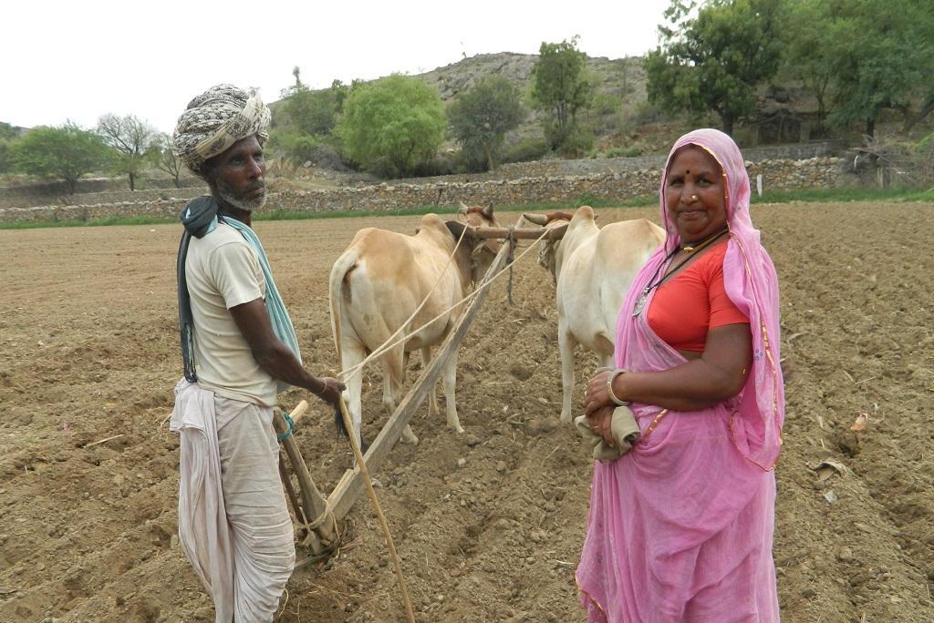 राजस्थान के भीम गांव में हल से जुताई करता एक मजदूर। फोटो: अनिल अश्वनी शर्मा