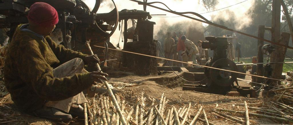 The comprehensive analysis of India's sugar industry showed how the country must now move to a more sustainable cultivation of sugarcane. Photo: Agnimirh Basu