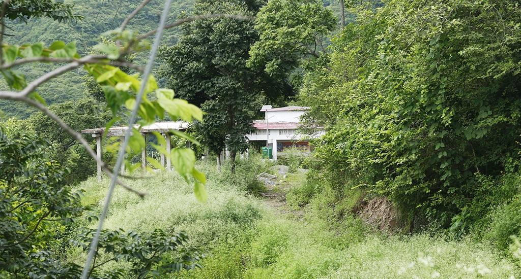 Bushes and shrubs have grown on the three-kilometre stretch of road that leads to Baluni.