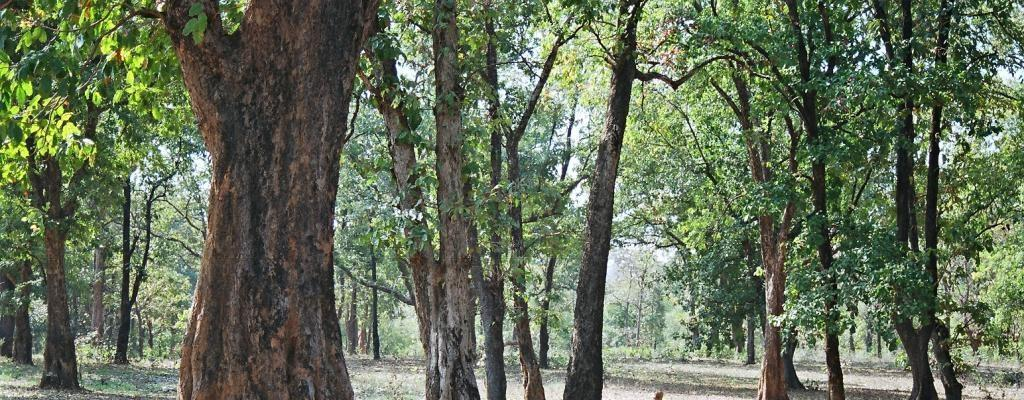 A total of 481.56 hectares (ha) of forest land in protected areas in 2019. Photo: Surya Sen