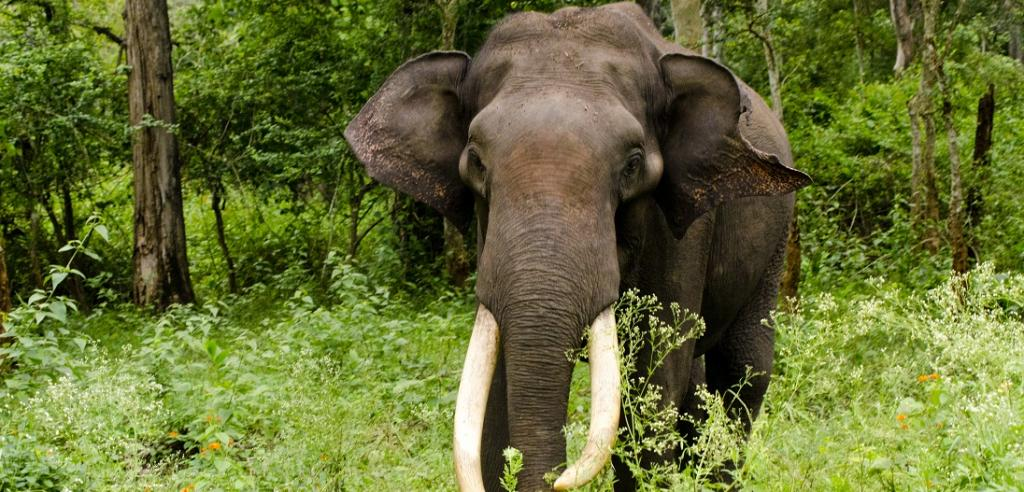 Conservationists slam draft of new government elephant report. Photo: Flickr