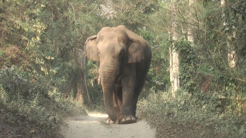 """""""India cannot fail gajah. The latter's survival and ecological security is linked to our very own,"""" the Elephant Task Force said. Photo: Karpagam Chelliah"""