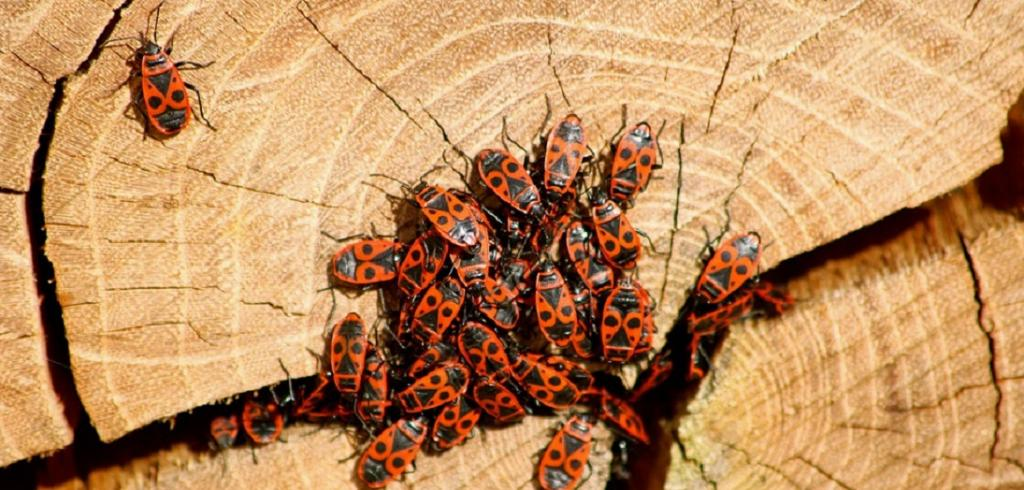 The next invasion of insect pests will be discovered via social media. Photo: Pixabay