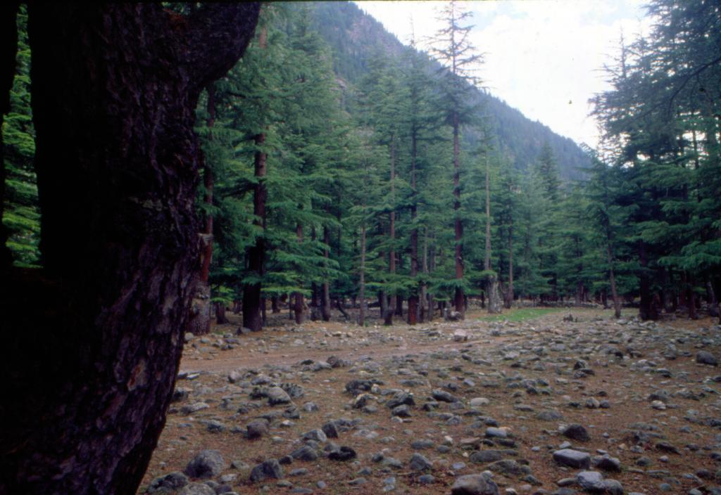 Compensatory afforestation: 70% data with ministry incorrect, writes top forest officer. Photo: Vikram Kalra