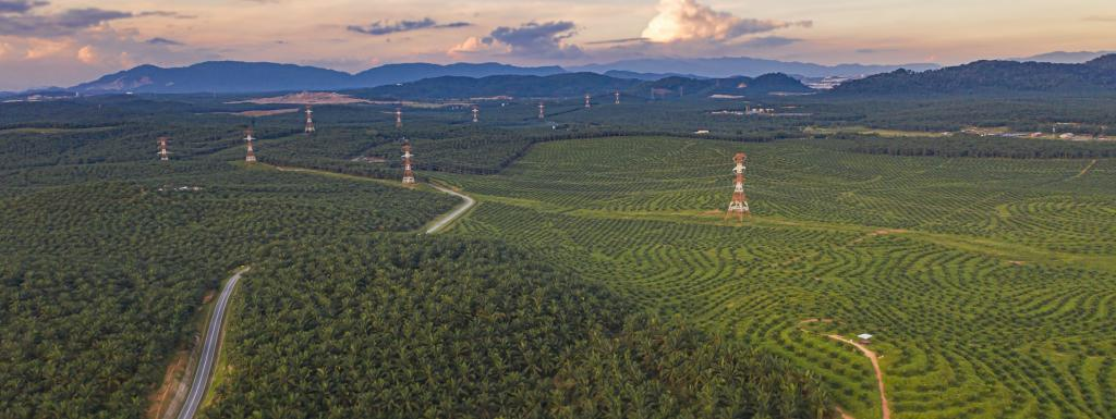 How our food choices cut into forests and put us closer to viruses