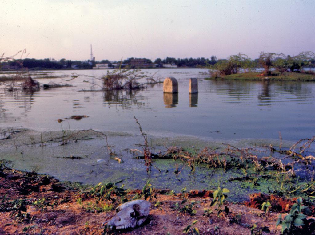 तबाह हुए तालाब