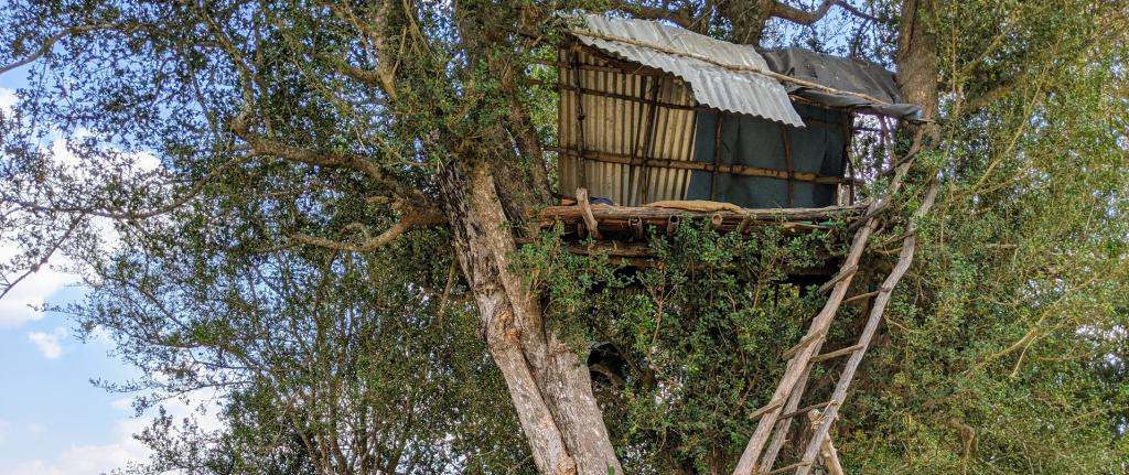 The machan, a raised tree-hut, offers a vantage point for villagers to monitor their fields. Photo: Sumeet S Gulati