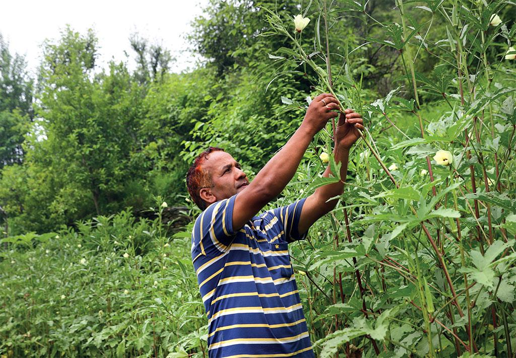 Achalanand Jugran, a migrant, returned to Balodi village in Pauri and has started growing vegetables in his land (Photograph: Srikant Chaudhary)