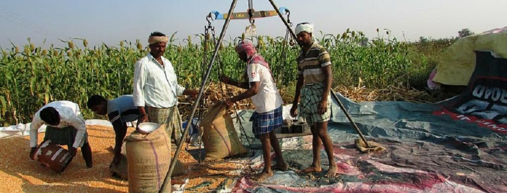 Agriculture sector beats pandemic; contributed more to national economy than industry last year. Photo: Piqsels