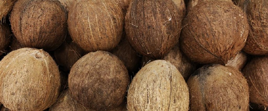 World Coconut Day: A wonder fruit that has nurtured humanity. Photo: Pixabay