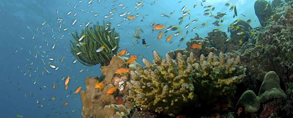The technique used by the study is another step to better understand both, 'alive' and 'dead' coral reefs. Photo: Wikimedia Commons