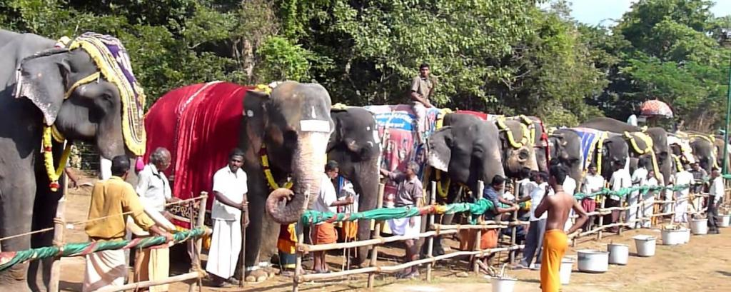A unique rejuvenation camp in Tamil Nadu for captive elephants. Photo: Youtube