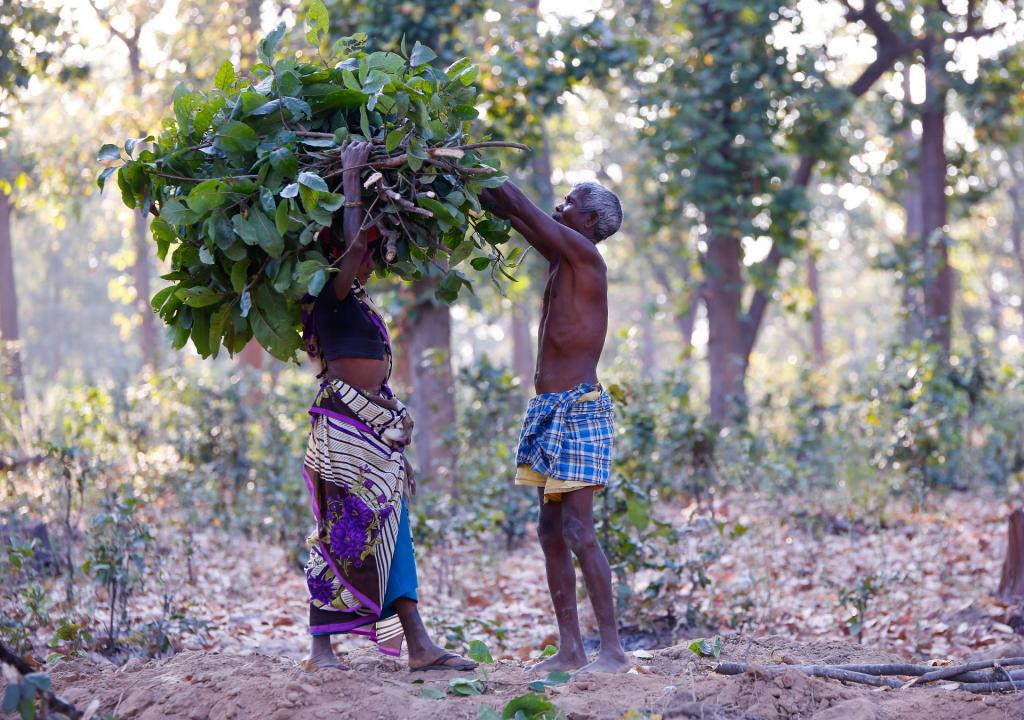 CWH — as envisaged in the FRA — does not necessarily involve resettlement of forest-dwellers. Photo: Vikas Choudhary