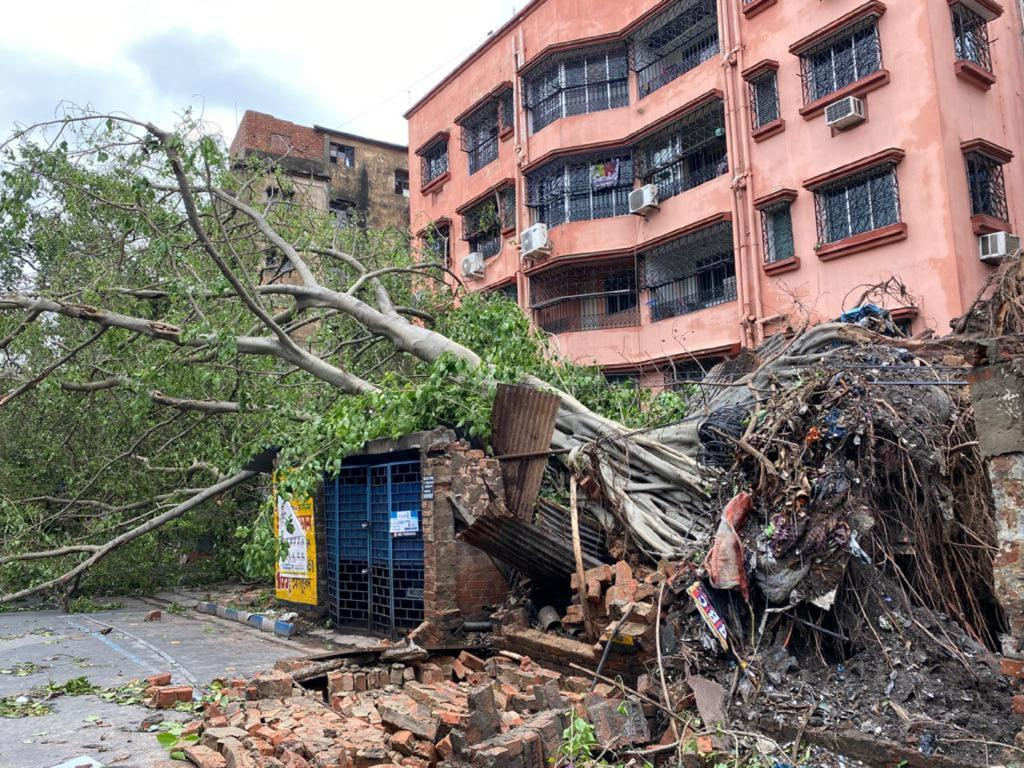 Trees uprooted by Amphan, as seen in Kolkata. The cyclone caused damage amounting to $13 billion in West Bengal alone. Photo: Avantika Goswami
