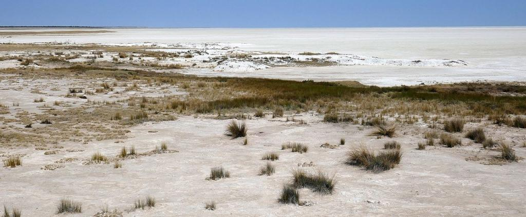 The Etosha pan is a large salt pan in north of Namibia. Photo: Wikimedia Commons