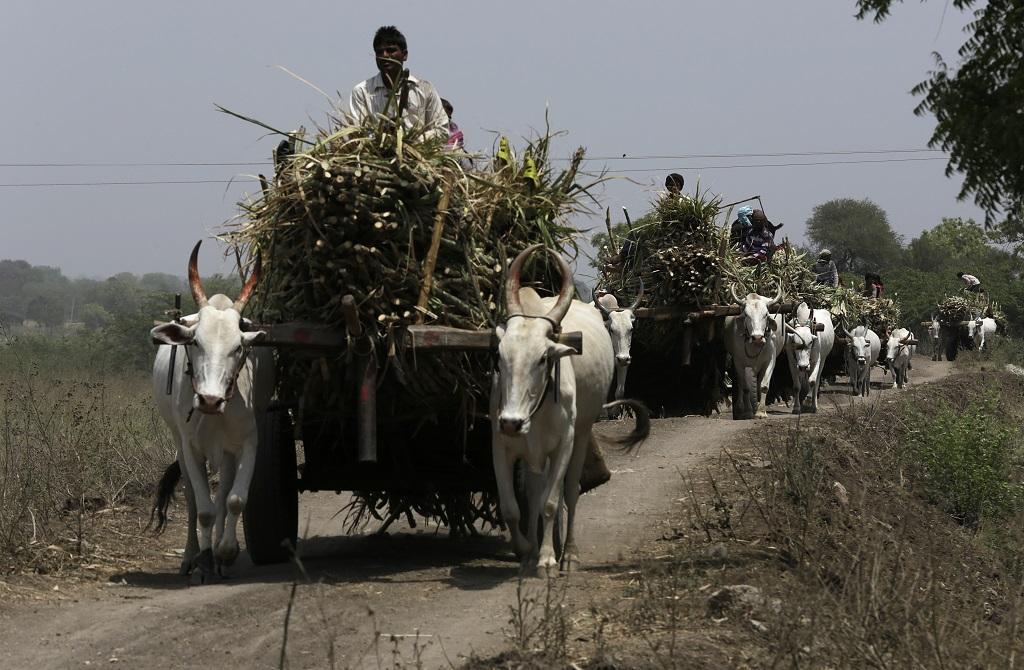 संसद में दी गई जानकारी के मुताबिक, चीनी मिलों पर उत्तर प्रदेश के किसानों का सबसे अधिक बकाया है। फोटो: विकास चौधरी