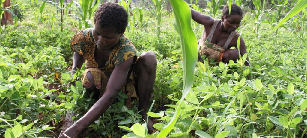 The important impact of South-South cooperation, referring to the technical cooperation among developing countries in the Global South, is gradually making itself felt. Photo: FAO / A Masciarelli
