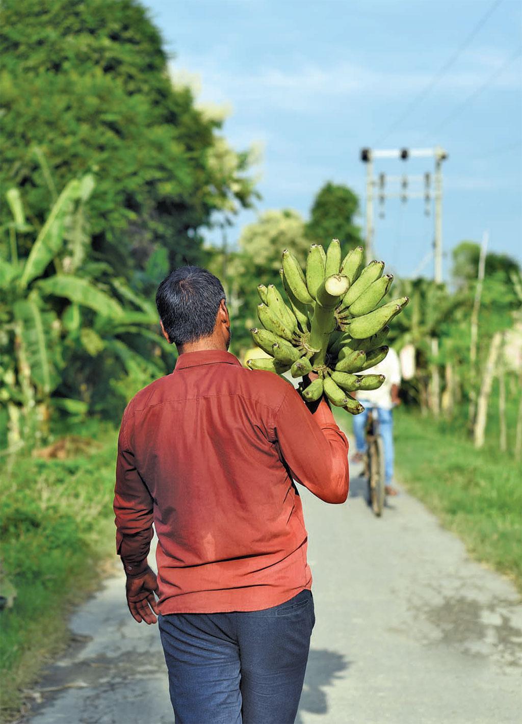 Traditional banana varieties