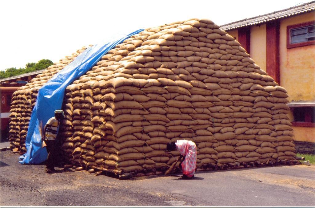 भारतीय खाद्य निगम के गोदाम में अनाज का स्टॉक ओवरफ्लो हो रहा है। फोटो: एफसीआई