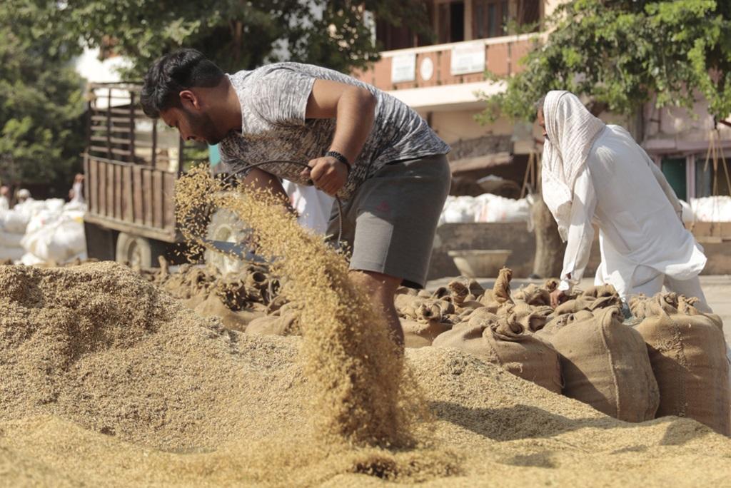 होडल अनाज मंडी में धान से नमी कम करने की कोशिश करते कमरन के सरपंच राम गोपाल के पुत्र। फोटो: श्रीकांत चौधरी