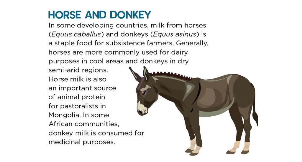 In some developing countries, milk from horses (Equus caballus) and donkeys (Equus asinus) is a staple food for subsistence farmers. Generally, horses are more commonly used for dairy purposes in cool areas and donkeys in dry semi-arid regions. Horse milk is also an important source of animal protein for pastoralists in Mongolia. In some African communities, donkey milk is consumed for medicinal purposes.