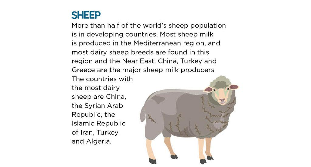 More than half of the world's sheep population is in developing countries. Most sheep milk is produced in the Mediterranean region, and most dairy sheep breeds are found in this region and the Near East. China, Turkey and Greece are the major sheep milk producers. The countries with the most dairy sheep are China, the Syrian Arab Republic, the Islamic Republic of Iran, Turkey and Algeria.