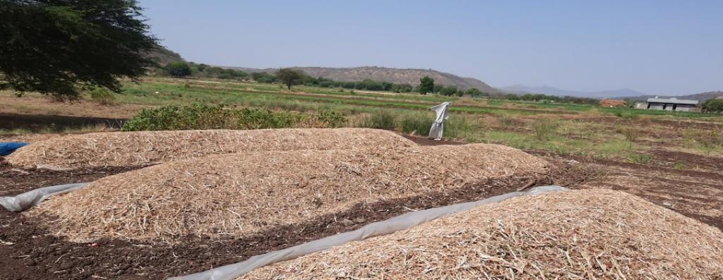 Onions in Vetale village. Photo: Raji Ajwani-Ramchandani
