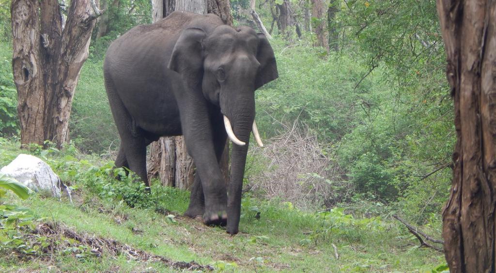 Nilgiri Elephant Corridor: SC upholds Madras HC order affirming animals' right of passage. Photo: Wikimedia Commons