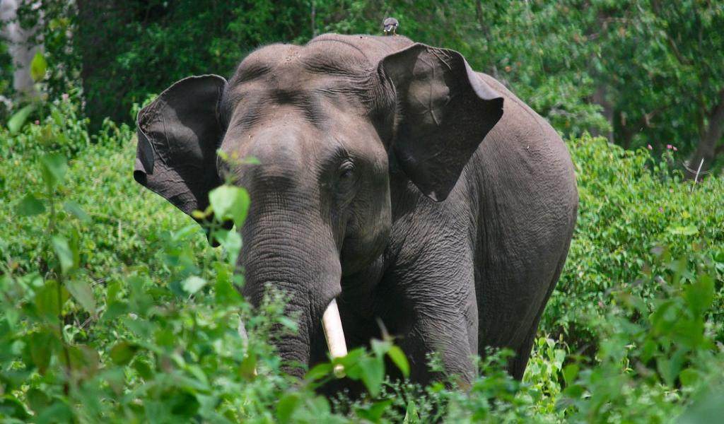 Chhattisgarh begins process to declare Lemru Elephant Reserve amid controversies. Photo: Wikimedia Commons
