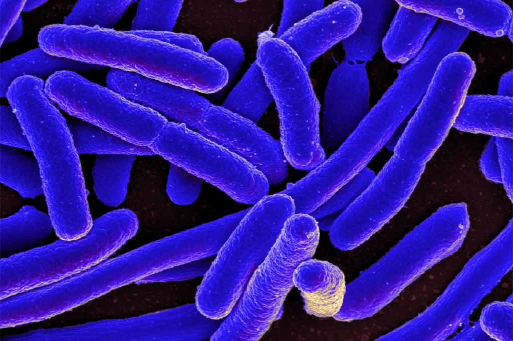 New method to remove harmful E. coli from water
