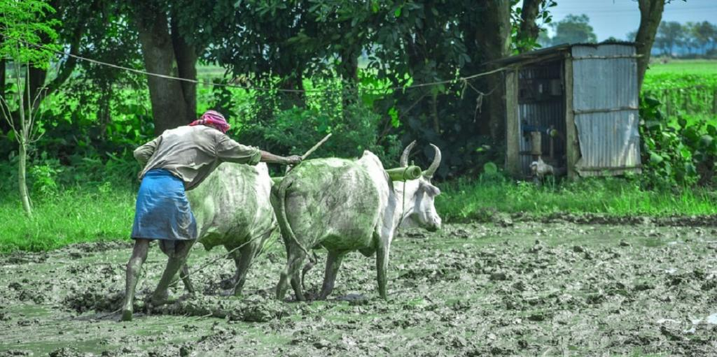 Weather advisory drives farmers' income by up to 50%. Photo: Pixabay