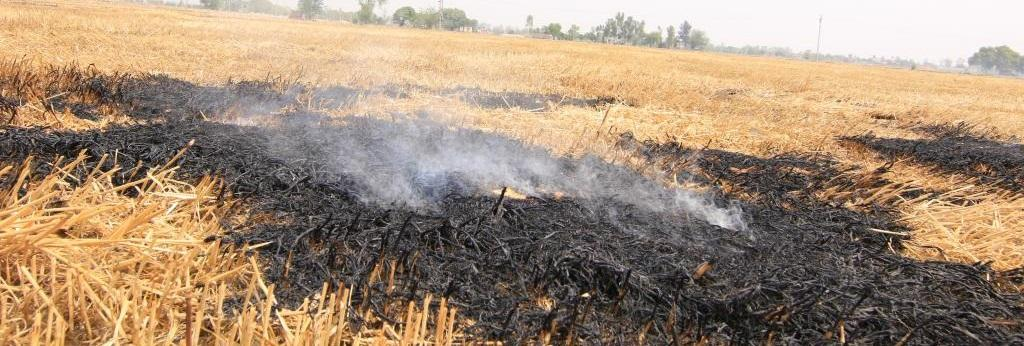 The number of recorded farm fires from September 21-November 9, 2020 in Punjab alone was 62,844. Photo: Sunny Gautam