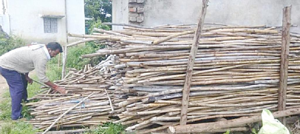 Small-scale markets will be a win-win for marginal farmers, buyers of cultivated bamboo. Photo: Abhishek Gawande